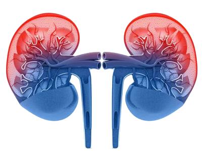 checkup-renal